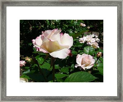 When Springtime Comes Calling Framed Print