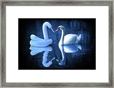 When Swans Meet Framed Print