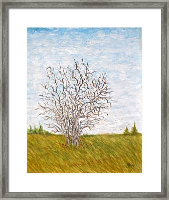 When The Apples Are Gone Framed Print by Norman F Jackson