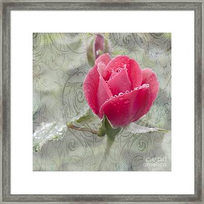 When The Dew Is On The Rose Framed Print by Betty LaRue