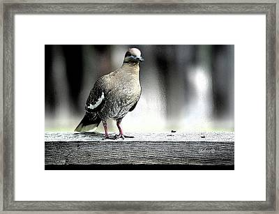 When The Doves Cry Framed Print