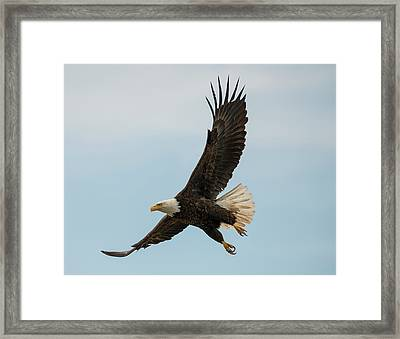 When The Eagle Flies Framed Print
