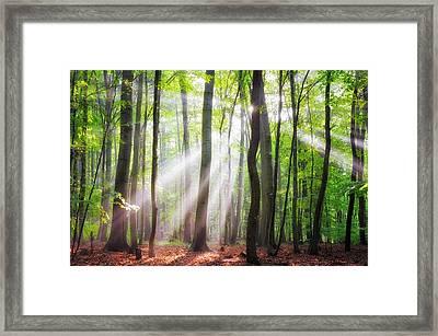 When The Sun Shine On Your Way Framed Print by Janek Sedlar