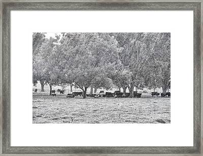 When Will The Rain Let Up Framed Print by Jan Amiss Photography