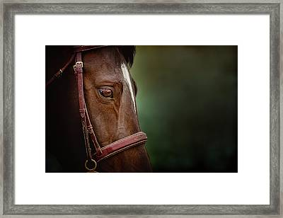 When You Look Into His Eye, What Do You See? Framed Print