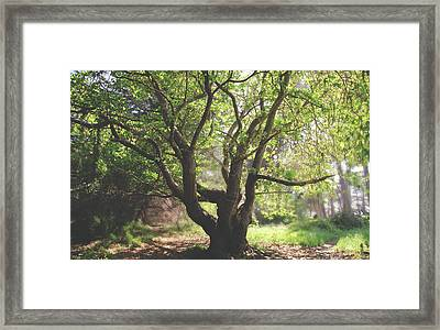When You Need Shelter Framed Print by Laurie Search