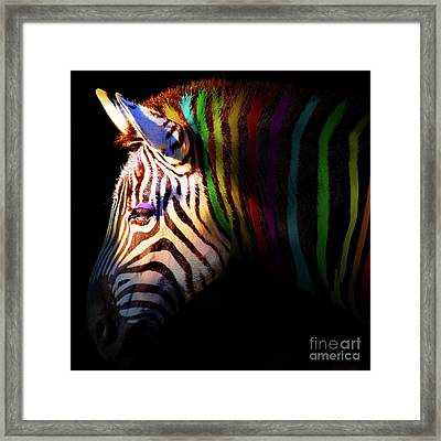 When Zebras Dream 7d8908 Square Framed Print by Wingsdomain Art and Photography