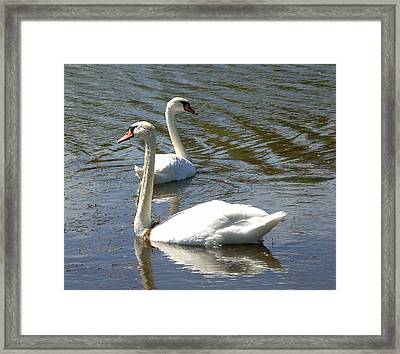 Where Are You Going Framed Print by Sholeh Mesbah