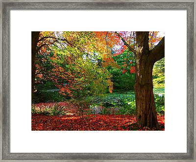 Where Autumn Lingers  Framed Print by Connie Handscomb