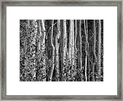 Where Framed Print