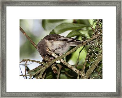 Where Did It Go Framed Print by DigiArt Diaries by Vicky B Fuller