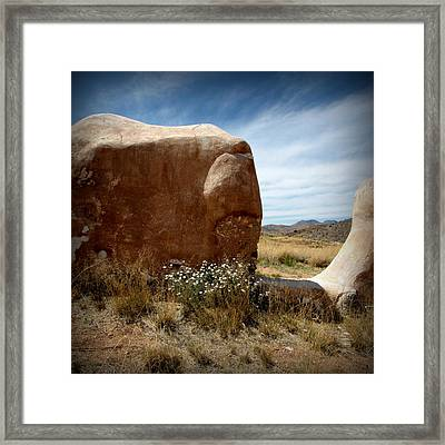 Framed Print featuring the photograph Where Have All The Flowers Gone by Joe Kozlowski