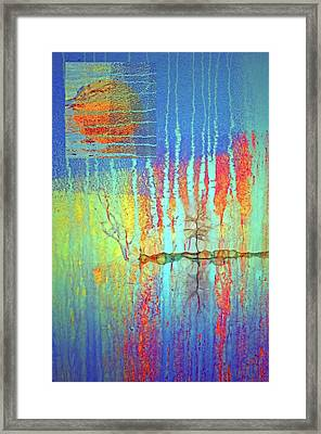 Framed Print featuring the photograph Where Have All The Trees Gone? by Tara Turner