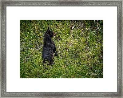 Where Is Mom Framed Print by Robert Bales