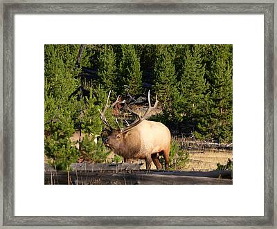 Where Is The Cows Framed Print by David Wilkinson