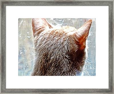 Where Is The Snow  Framed Print by JW Hanley