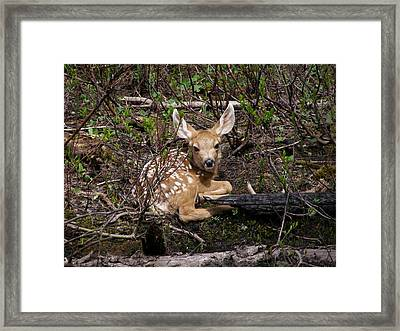 Where Mother Said Stay Framed Print