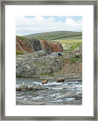 Framed Print featuring the photograph Where The Bears Are  by Cheryl Strahl