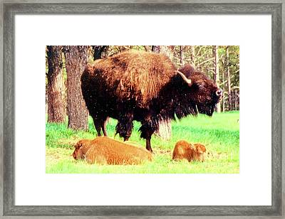 Where The Buffalo Roam Framed Print by Desiree Paquette