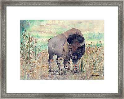 Where The Buffalo Roams Framed Print by Arline Wagner