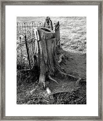 Where The Cows Can Framed Print