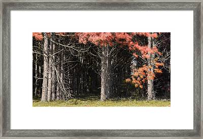 Where The Fairies Go Framed Print