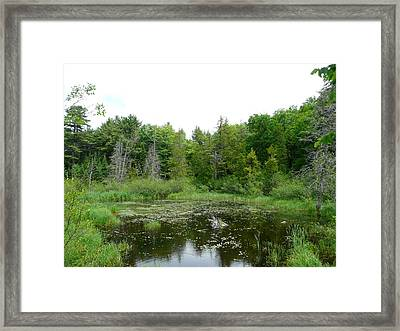 Where The Green Things Live Framed Print by Dmytro Toptygin