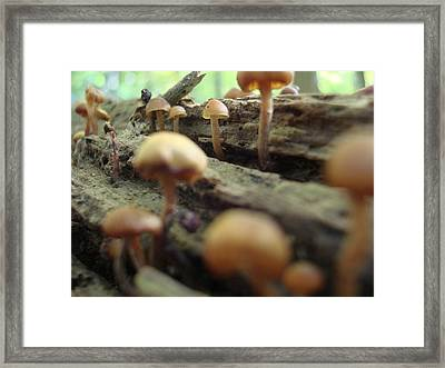 Framed Print featuring the photograph Where The Shadows Fall by Christie Minalga