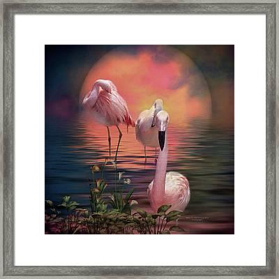 Where The Wild Flamingo Grow Framed Print by Carol Cavalaris