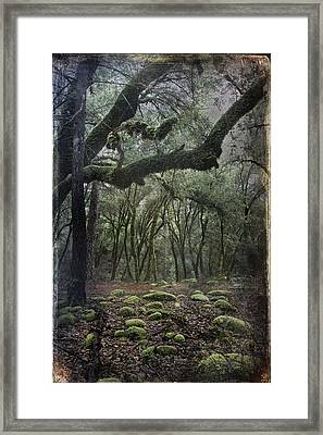 Where The Wild Hearts Roam Framed Print by Laurie Search