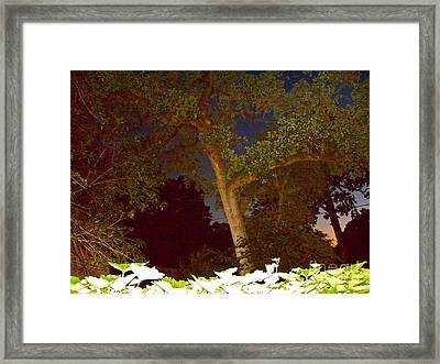 Where The Wild Things Were Framed Print by Chuck Taylor