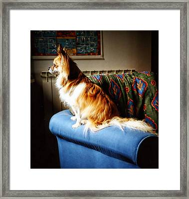 Where's Daddy Framed Print by Dorothy Berry-Lound