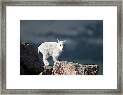 Framed Print featuring the photograph Where's Mom? by Gary Lengyel