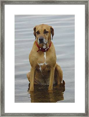 Where's The Pillow Framed Print by Debbie May