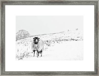 Which Way Is South? Framed Print