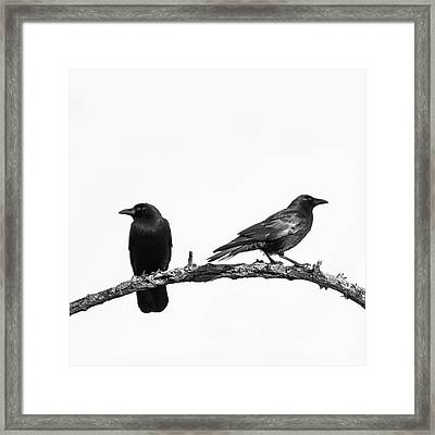 Which Way Two Black Crows On White Square Framed Print by Terry DeLuco