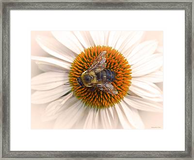 While In Macro  Framed Print