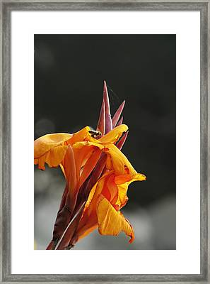 While Yet In Bloom Framed Print by Richard Gordon