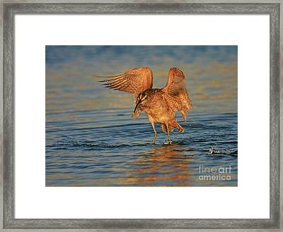 Whimbrel Colors Framed Print