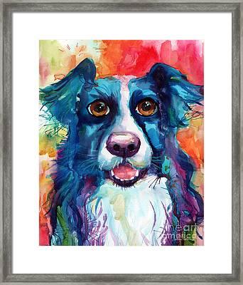 Whimsical Border Collie Dog Portrait Framed Print by Svetlana Novikova