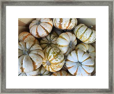 Whimsical Pumpkins Framed Print by Russell Keating
