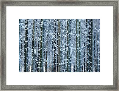 Whimsical Winters Framed Print by Roeselien Raimond