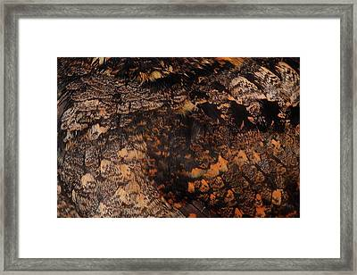 Whip-poor-will Feathers Framed Print by Bruce J Robinson