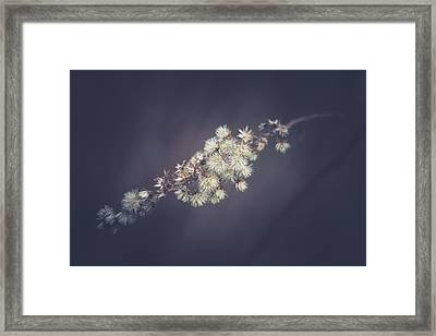 Framed Print featuring the photograph Whip by Shane Holsclaw