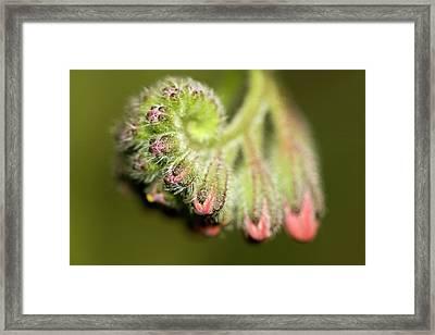Whirl Framed Print by Jouko Mikkola