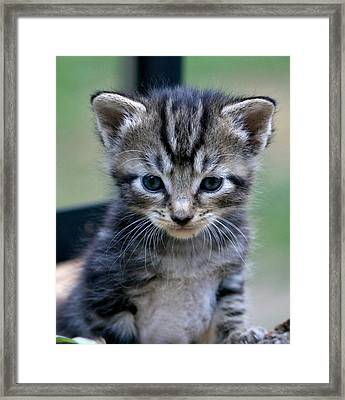 Whiskers Framed Print by Cathy Harper