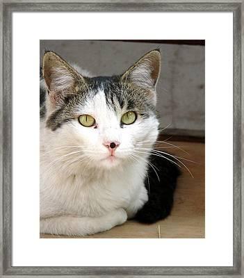 Whiskers Framed Print by Shariq Khan