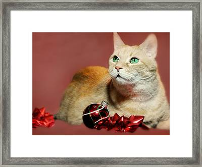 The Christmas Cat Framed Print by Diana Angstadt