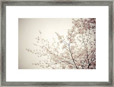 Whisper - Spring Blossoms - Central Park Framed Print