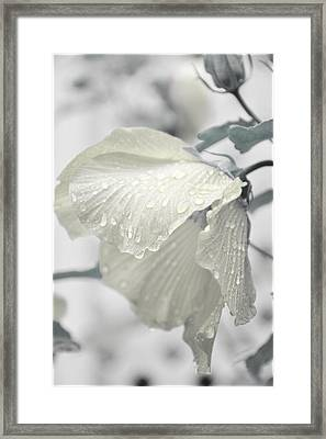Whisper In Pearlwhite Framed Print